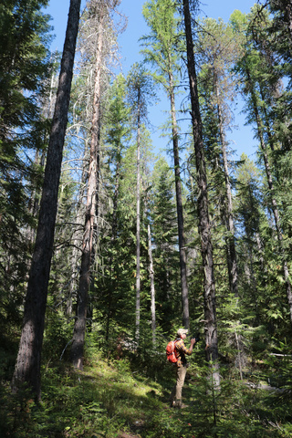 Bigfoot of Stevens County's Will Ulmer investigates