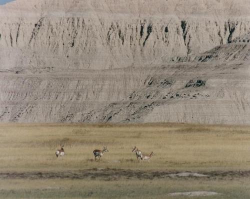 Antelope_Eastern_Montana_1996